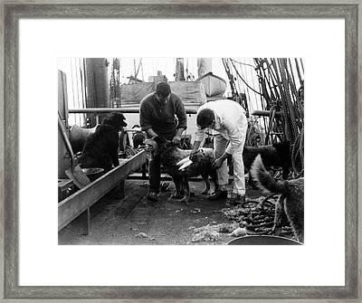 Terra Nova Antarctic Dogs Framed Print by Scott Polar Research Institute