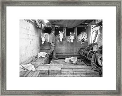 Terra Nova Antarctic Ponies Framed Print by Scott Polar Research Institute