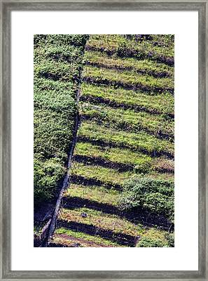 Terraced Fields In Madeira Framed Print by Dr Juerg Alean
