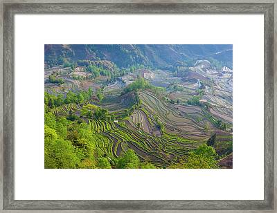 Terraced Rice Fields, Yuanyang, China Framed Print by Art Wolfe