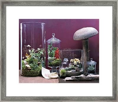 Terraiums Framed Print by Dana Gallagher
