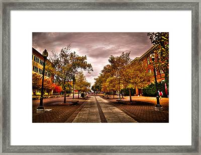 Terrell Mall On The Washington State Campus Framed Print by David Patterson