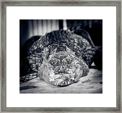Terrific Wild Vision Framed Print by Stwayne Keubrick
