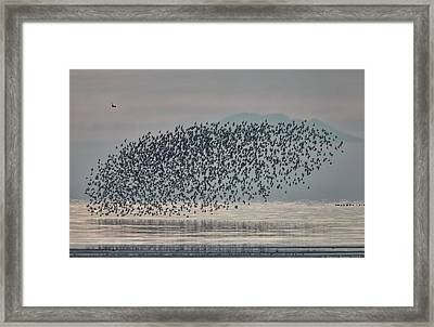 Terror In The Sky Framed Print by Daniel Behm