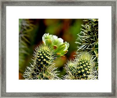 Tesajo Cholla Framed Print by Marilyn Smith
