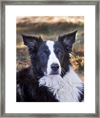 Tessie 3 Framed Print by Rich Franco