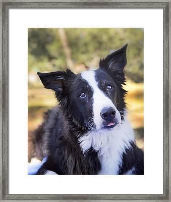 Tessie 4 Framed Print by Rich Franco