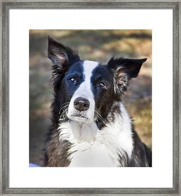 Tessie 5 Framed Print by Rich Franco