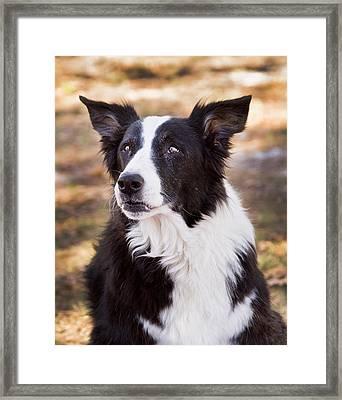 Tessie 6 Framed Print by Rich Franco