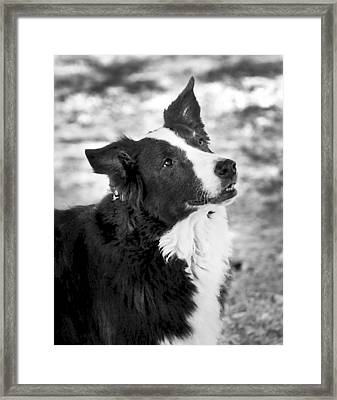 Tessie 7 Framed Print by Rich Franco
