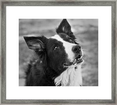 Tessie 9 Framed Print