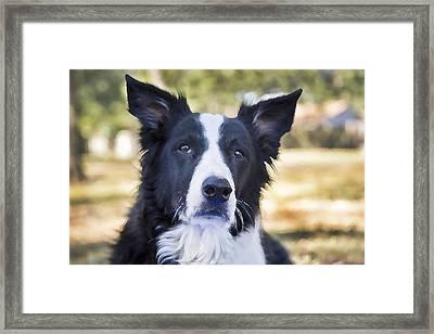 Tessie Good Girl Framed Print