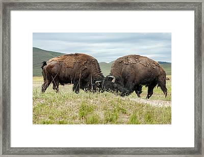 Framed Print featuring the photograph Test Of Strength by Jack Bell