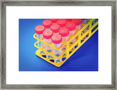 Test Tubes In A Rack Framed Print