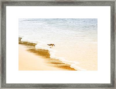 Testing The Water Framed Print by Karol Livote