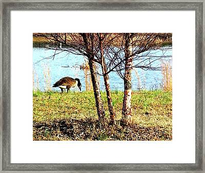Testing The Waters Framed Print