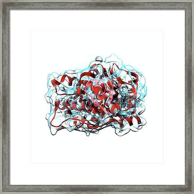 Testosterone Molecule Framed Print by Animate4.com/science Photo Libary