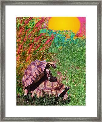 Testudine Passion Tango Framed Print by Alice Ramirez