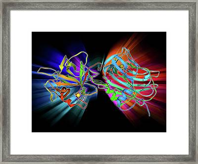 Tetanus Toxin C-fragment Molecule Framed Print by Laguna Design