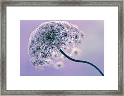 Framed Print featuring the photograph Tethered by Annette Hugen
