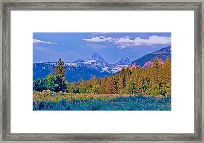 Teton Backside Wildflowers Framed Print by Larry Bodinson