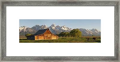 Teton Barn With Bison Framed Print by Aaron Spong
