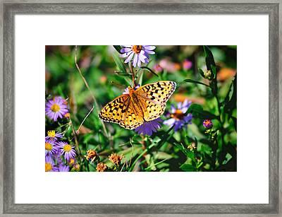 Teton Butterfly Framed Print