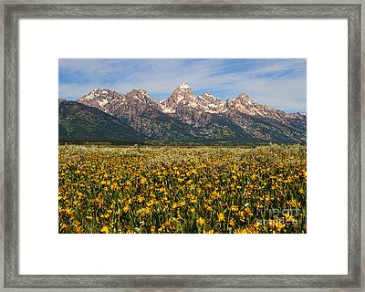 Tetons And Yellow Framed Print