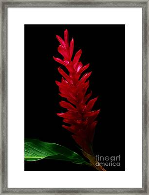 Teuila Framed Print by James Temple
