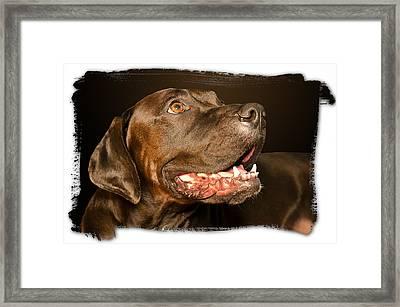 Tex The Dog Framed Print by Harold Bonacquist
