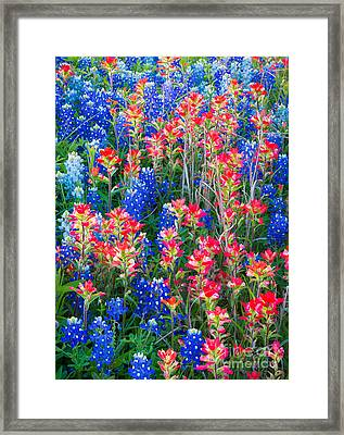 Texan Quilt Framed Print by Inge Johnsson