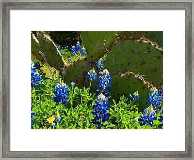 Texas Blue Bonnets Framed Print by Mark Weaver
