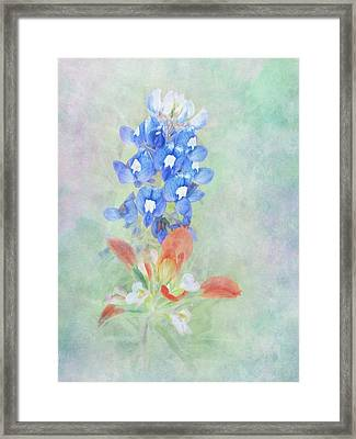 Texas Bluebonnet And Indian Paintbrush Framed Print