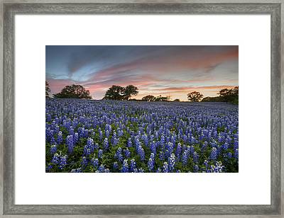 Texas Bluebonnet Images - Evening In The Texas Hill Country 2 Framed Print