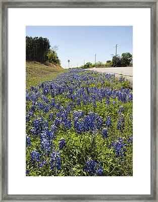 Texas Bluebonnet Roadside Wildflowers Framed Print