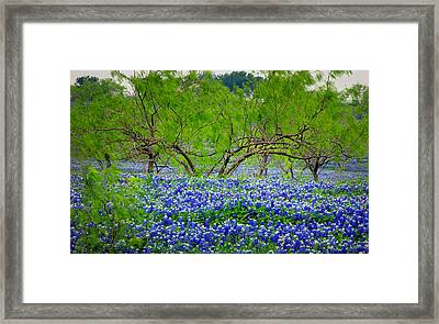 Texas Bluebonnets - Texas Bluebonnet Wildflowers Landscape Flowers Framed Print