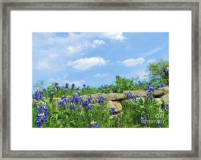 Texas Bluebonnets 08 Framed Print