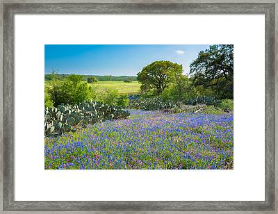 Texas Bluebonnets And Cactus Framed Print