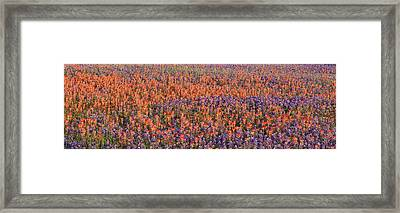 Texas Bluebonnets And Indian Framed Print by Panoramic Images