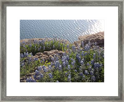 Texas Bluebonnets At Lake Travis Framed Print by Rebecca Cearley