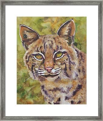 Texas Bobcat Framed Print by Robin Hegemier