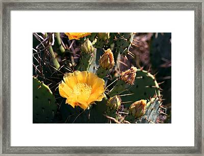 Texas Cactus Framed Print by Linda Cox