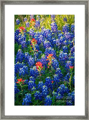Texas Colors Framed Print by Inge Johnsson