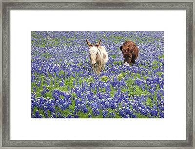 Framed Print featuring the photograph Texas Donkeys And Bluebonnets - Texas Wildflowers Landscape by Jon Holiday