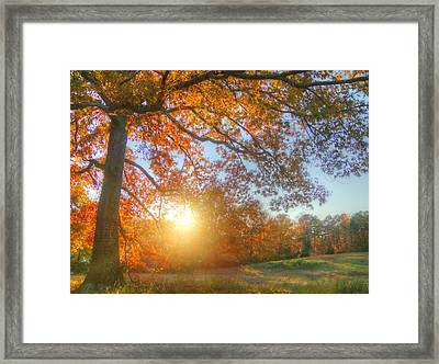 Texas Fall Colors 002 Framed Print