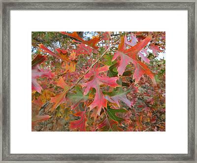 Texas Fall Colors Framed Print by Rosalie Klidies