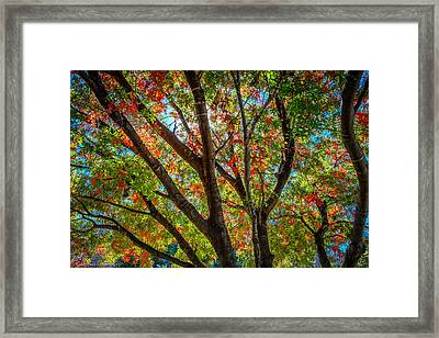Framed Print featuring the photograph Texas Fall Glory by Ross Henton