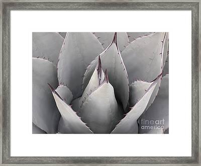 Texas Flower Framed Print