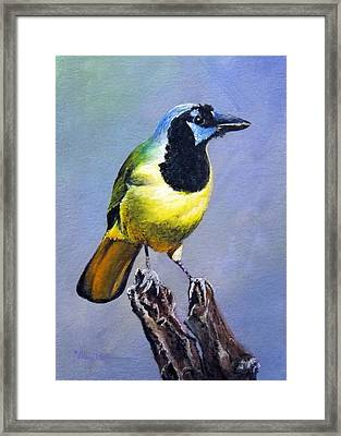 Texas Green Jay Framed Print