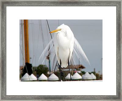 Framed Print featuring the photograph Texas Gulf Coast Great White Egret by Linda Cox
